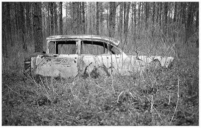 Woods Car