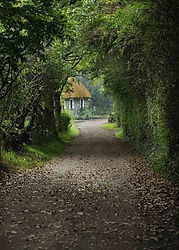 Bunratty Cottage Lane (Britbear)
