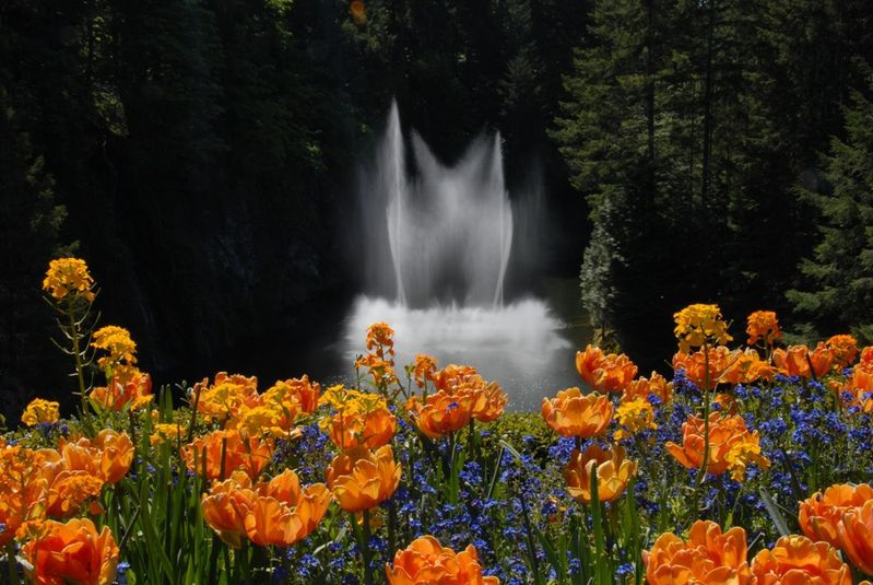 Fountain and Flowers, Butchart Gardens