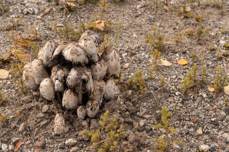 Mushrooms on the roadside