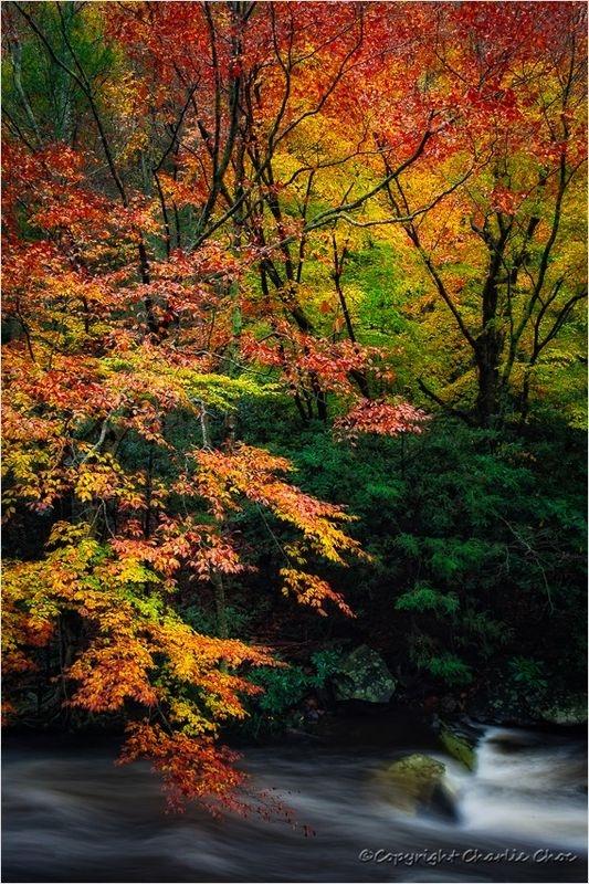 Colors of Autumn