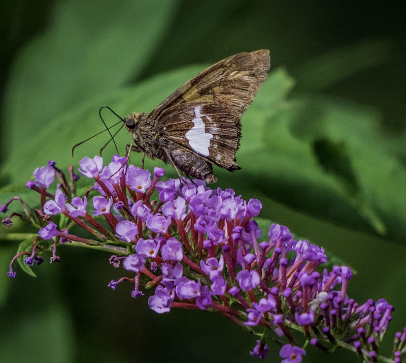Butterfly at Work