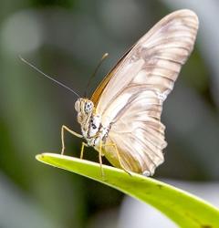 buterfly.tif