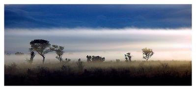 Kruger Park Morning