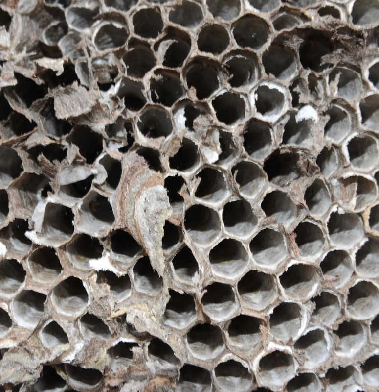 Bee Hive various