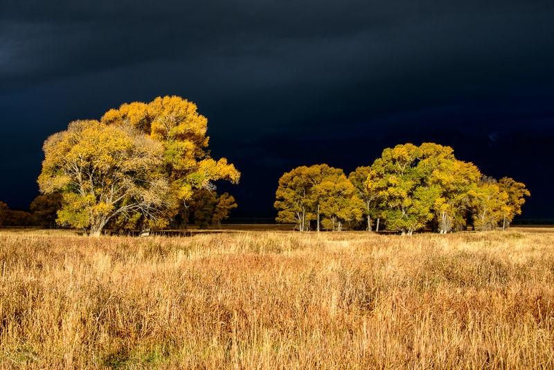Fall Color - Grand Teton NP