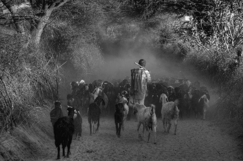 """""""THE SHEPHERD"""""""