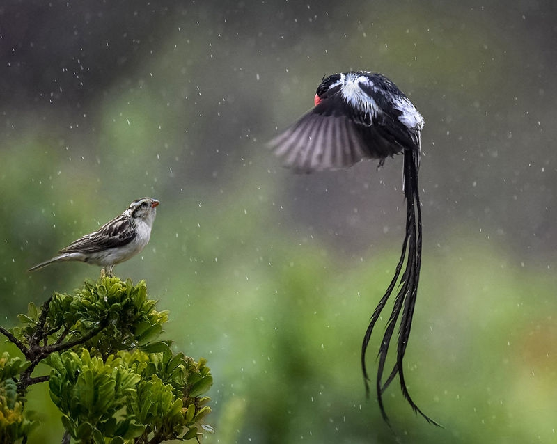 Courting in the Rain