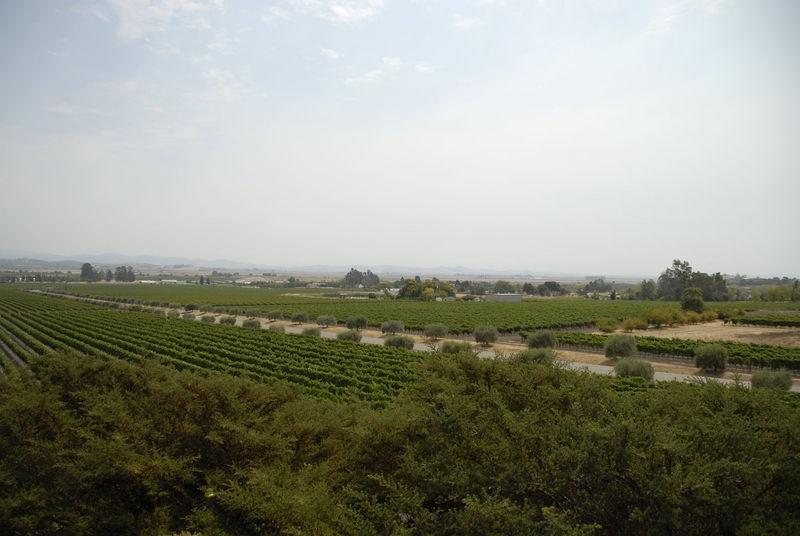 Vineyards – Sonoma, CA