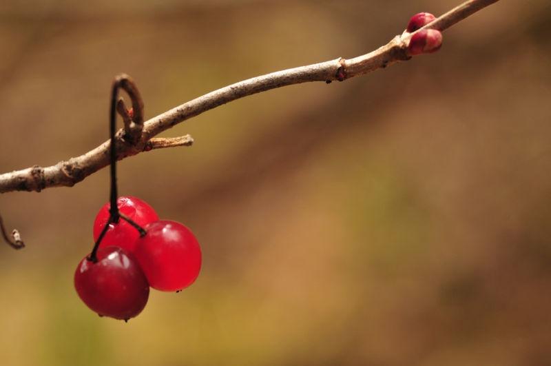 Banff Buffalo Berries