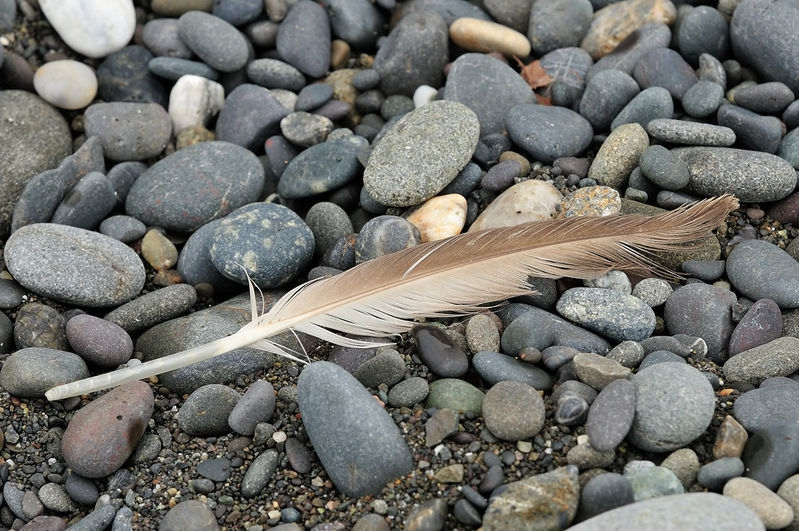 Feather on the Beach