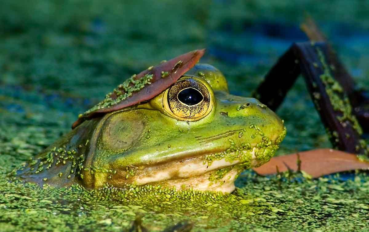 Cincinnati Nature Center Photography Contest