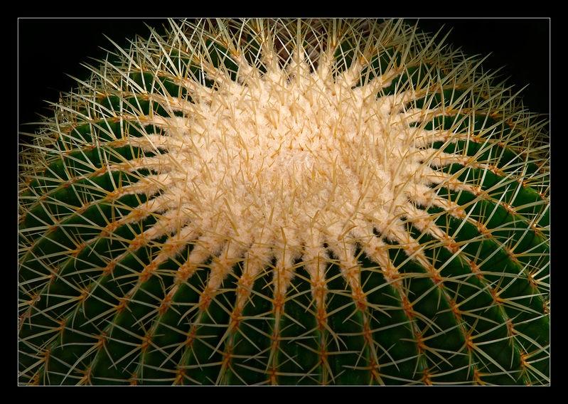 Cactus Planet