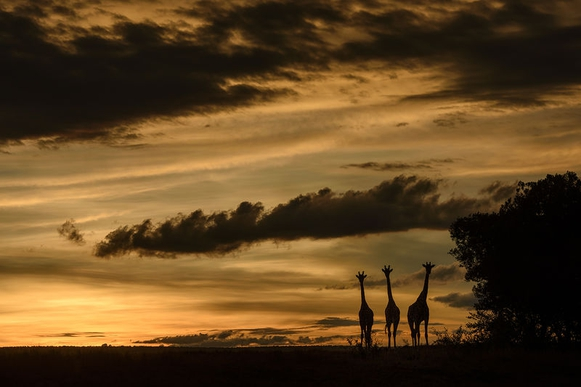Rain season in Masai Mara