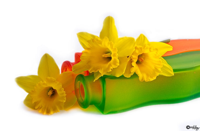 3daffodil & 2 vases