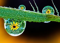 Dewdrops - Reflections (pipco)