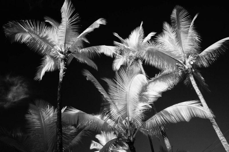 SUMMER_TREES