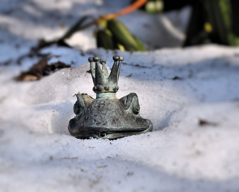 Frog Prince in the Snow
