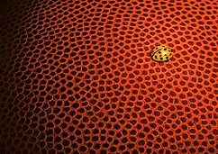 "Nikon D90, F/36, 1/13, sec, ISO 200, Tamron 90mm macro My intent was to come up with a 'similar pattern' contrast, between the large-sized basketball and the diminutive ladybug. Winner of the Macro forum's ""Patterns and Symmetry"" challenge: http://www.nikonians.org/forums/dcboard.php?az=show_topic&forum=169&topic_id=45350&mesg_id=45350&page=4"
