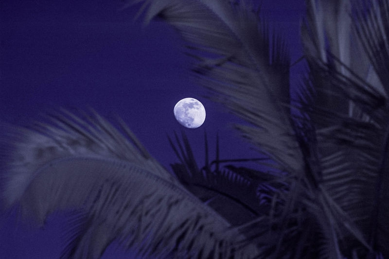 THE_MOON_and_PALM_FRONDS