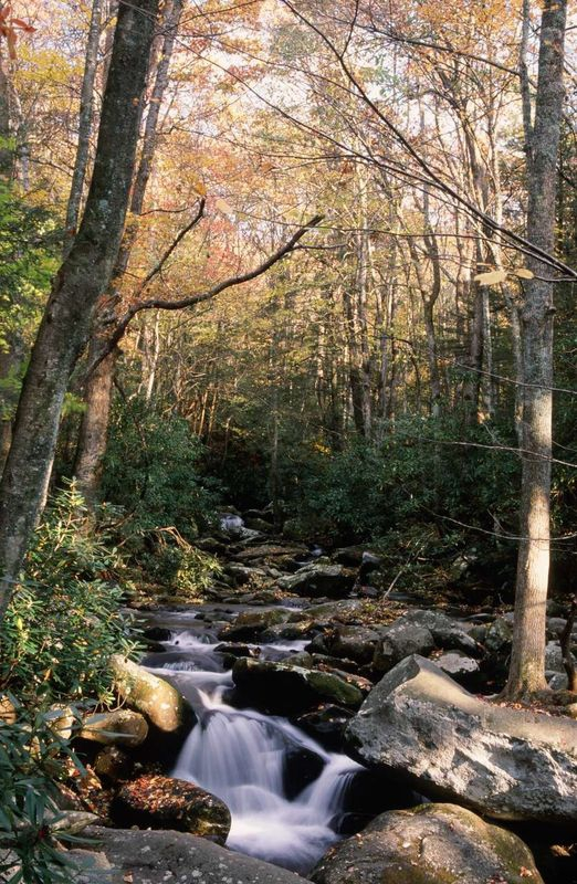 Creek at Roaring Forks