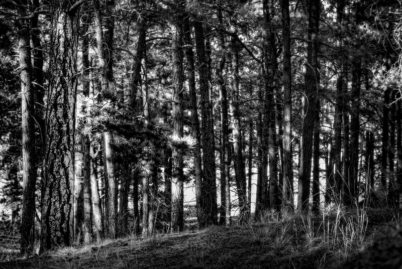 Forest light HDR