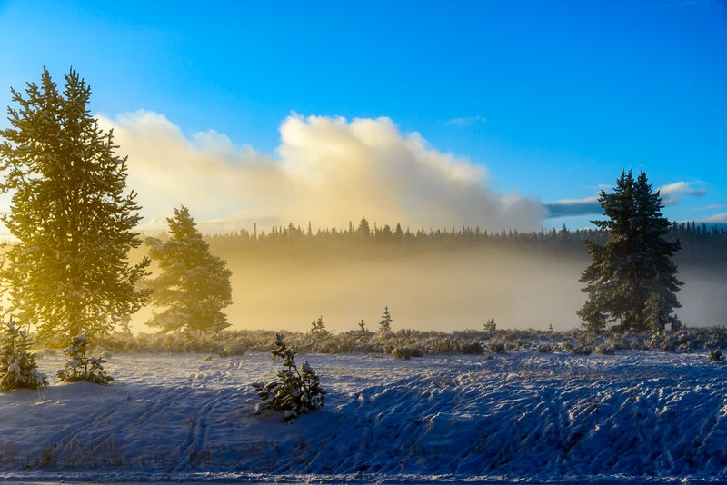 Foggy Sunrise - Yellowstone NP