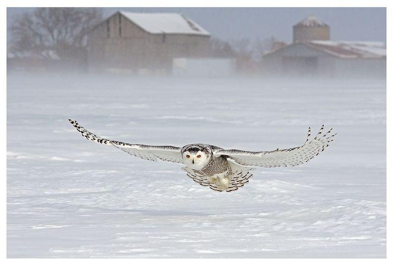 Gliding Snowy