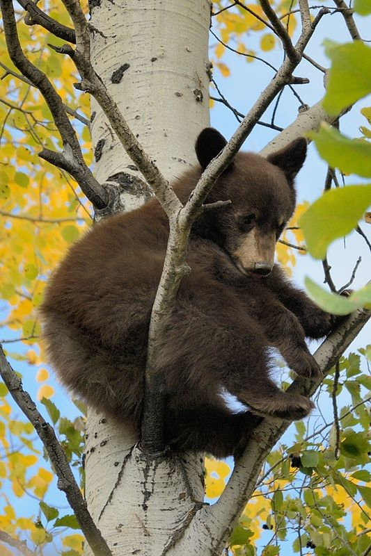 Hanging out in an aspen