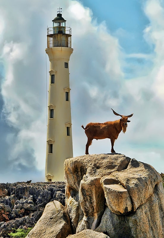 California Lighthouse....Aruba