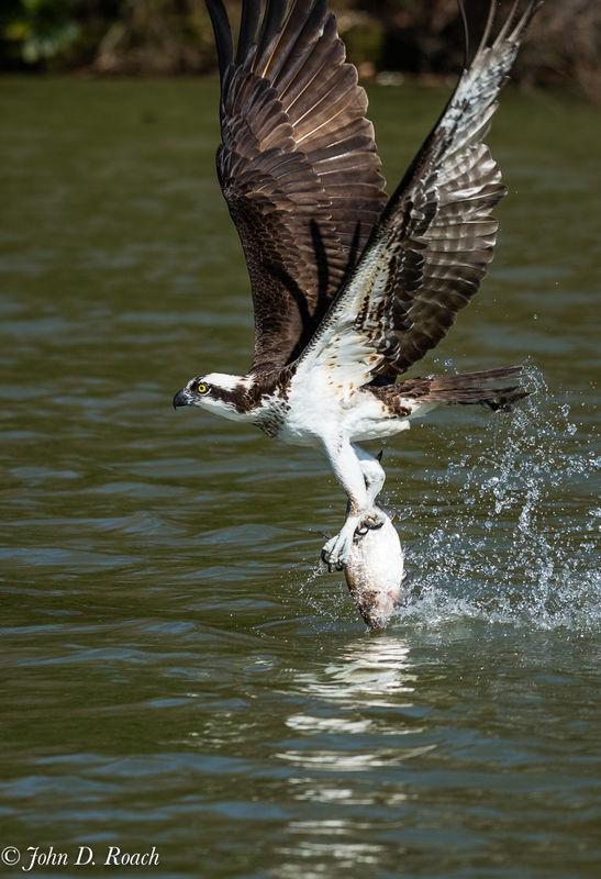 Lifting catch