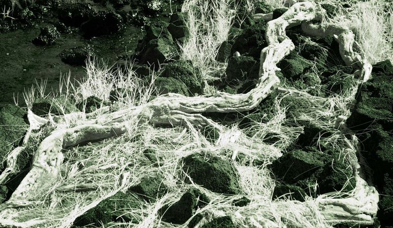 ROCKS_ROOTS_and_GRASS