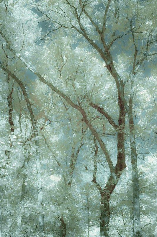 OCTOBER_TREES2