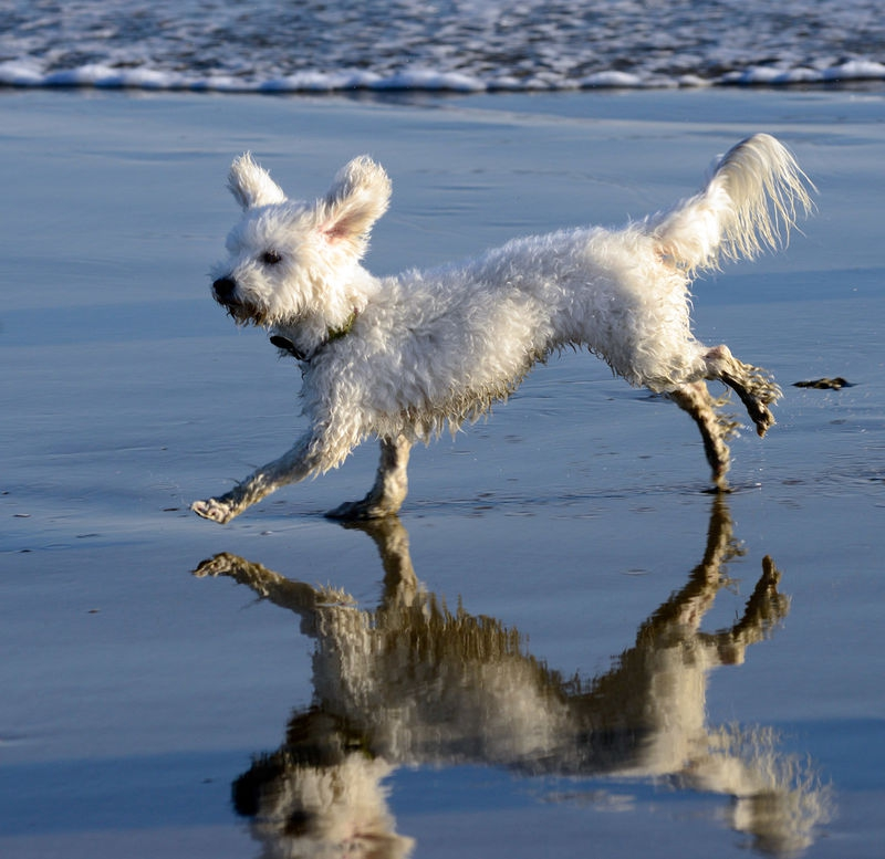 Local dog gona need a bath ,
