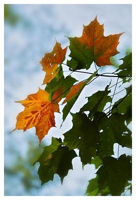 Foliage Change
