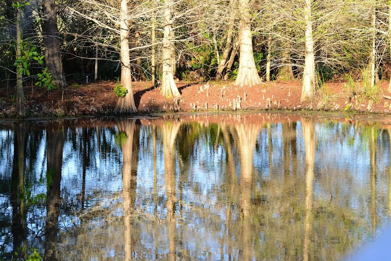 Afternoon Tree Reflections