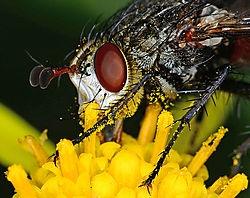 Fly in the Yard /arlon/