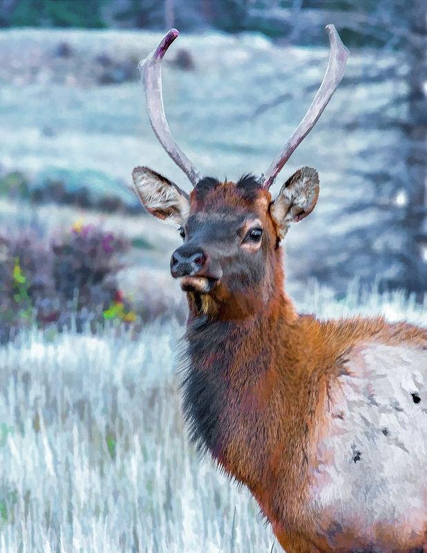 Elk In Paint