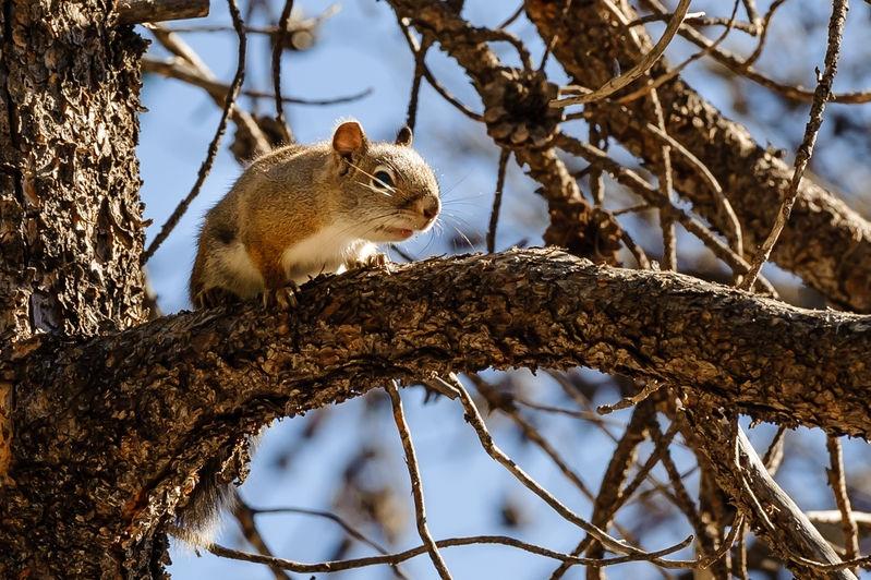 Mad squirrel near Nimph