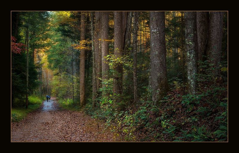 A Path in the Woods  - Path in Elkmont