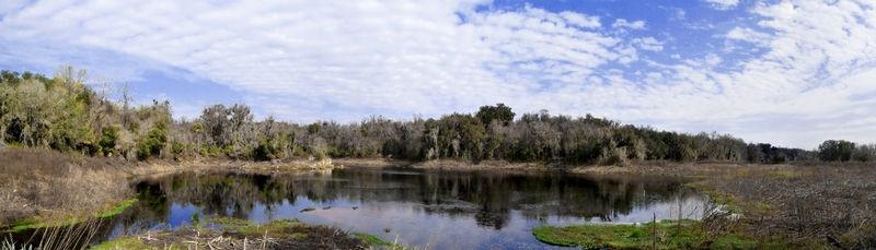 Alachua Sink January 2008 over 110 gators counted