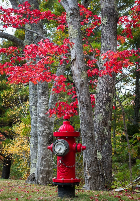 Fire_Hydrant_Red_Leaves