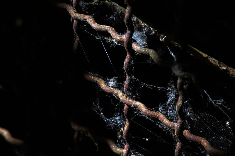 Wire and webs