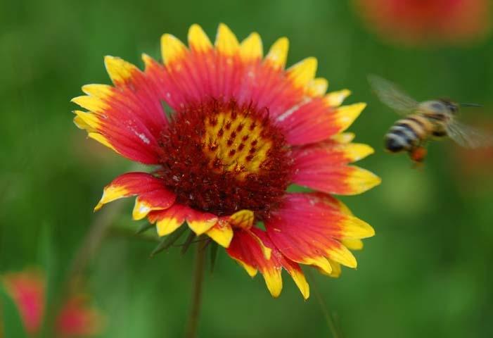 Pollenator!
