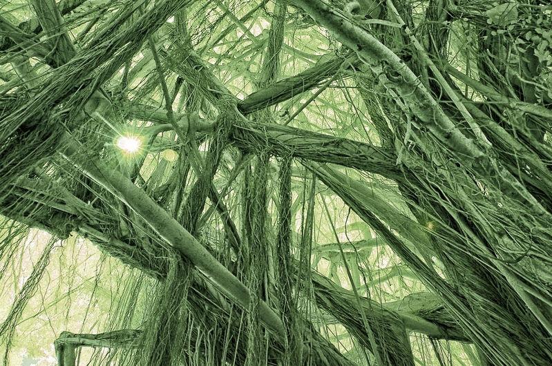 BINARY_SUN_and_BANYON_TREE_0015