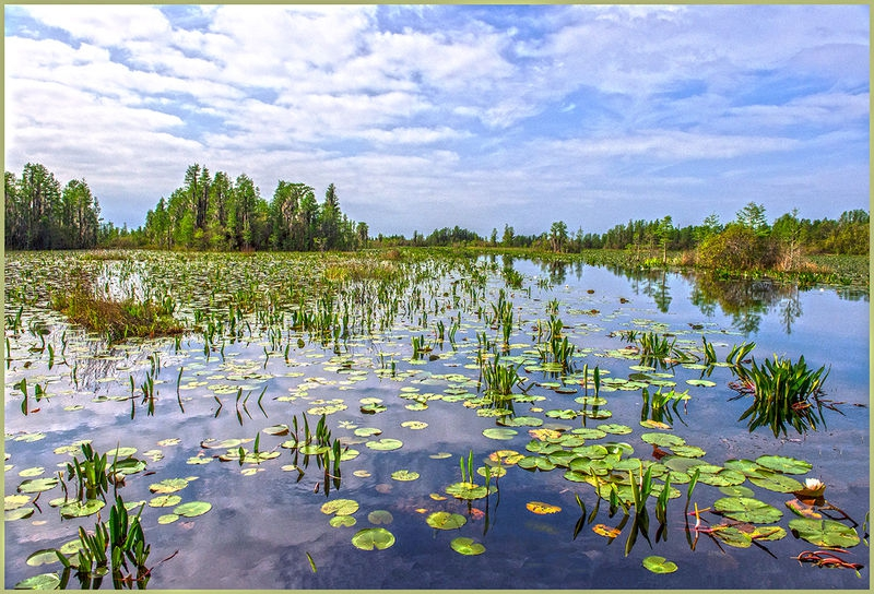 Okefenokee Swamp-PM