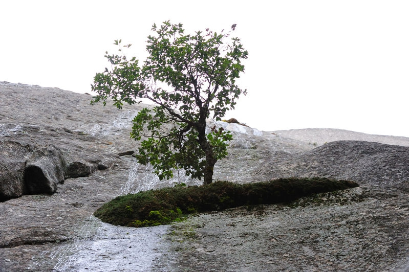 Tree growing out of rock and sky