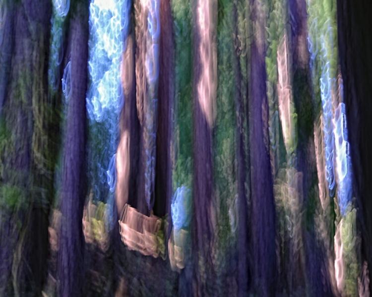 Patterns of Light:  Big Sur Redwoods Abstraction