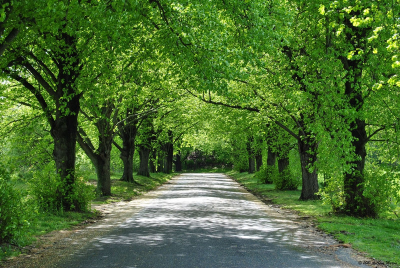 Trees lining the road