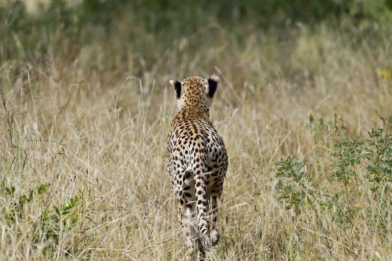 Serengeti National Park - Tanzania (2018)
